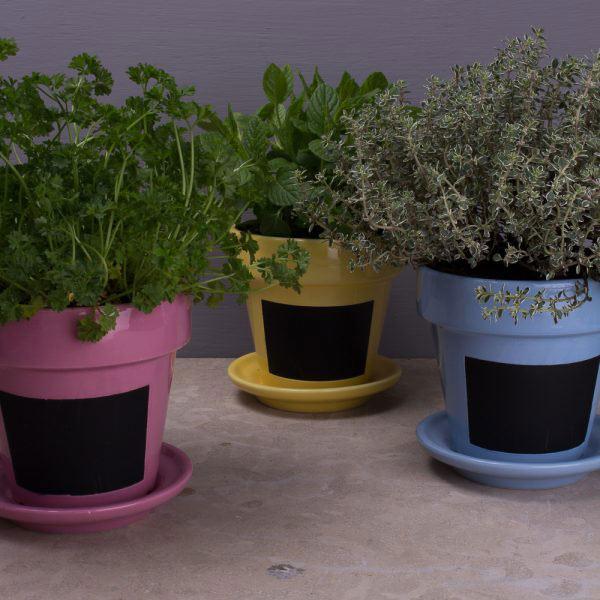 English Garden Set Of 3 Herb Pots